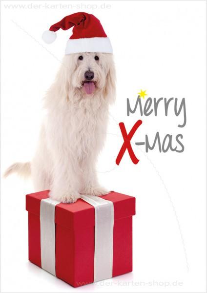 Doppelkarte Weihnachtskarte weißer Hund mit Nikolausmütze 'Merry X-Mas'
