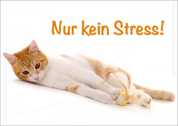 Postkarte Grußkarte entspannte Katze 'Nur kein Stress!'