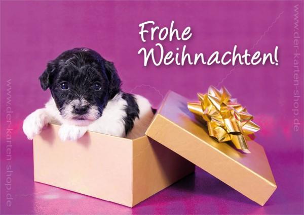 Postkarte Weihnachtskarte Hundebaby in Geschenkschachtel 'Frohe Weihnachten'