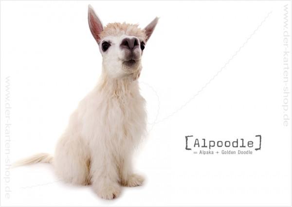 Postkarte Grußkarte Tierischer Mutant Alpaka – Golden Doodle 'Alpoodle'