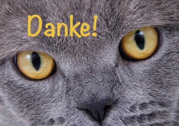 Doppelkarte Grußkarte Dankeskarte leuchtende Katzenaugen 'Danke!'