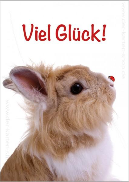 Postkarte Grußkarte süßes Kaninchen mit Marienkäfer 'Viel Glück!'