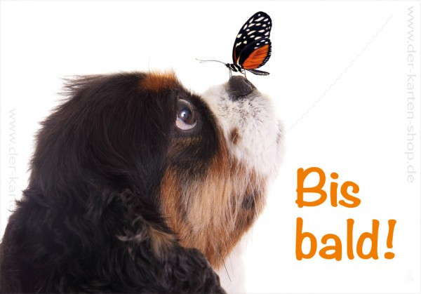 Magnet Kühlschrankmagnet süßer Hund mit Schmetterling auf der Nase 'Bis bald'