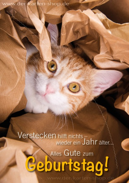Doppelkarte Geburtstagskarte Glückwunschkarte Katze 'Verstecken halt nichts. Wieder ein Jahr älter.'