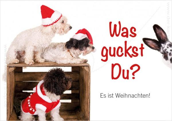 Doppelkarte Weihnachtskarte Hunde mit Kaninchen 'Was guckst Du? Es ist Weihnachten!'