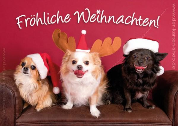 Doppelkarte Weihnachtskarte drei Chihuahua Hunde 'Fröhliche Weihnachten!'