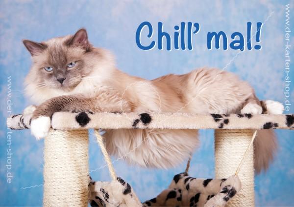 Doppelkarte Grußkarte entspannte Katze 'Chill mal!'