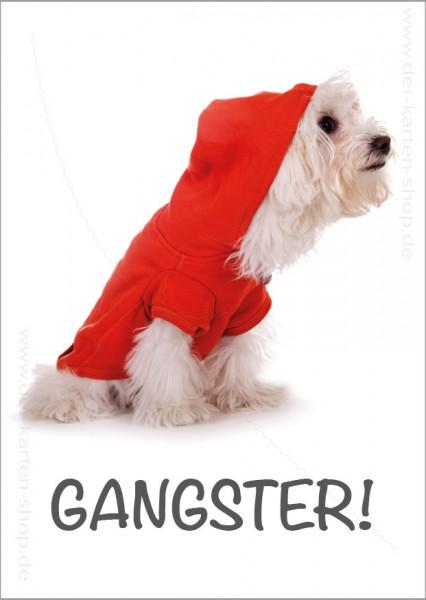 Postkarte Grußkarte witziger, weißer Hund im Kapuzenpulli 'Gangster'