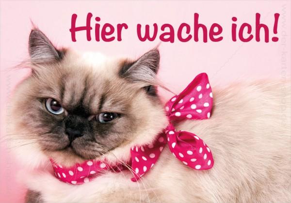Magnet Kühlschrankmagnet Katze schaut böse 'Hier wache ich!'