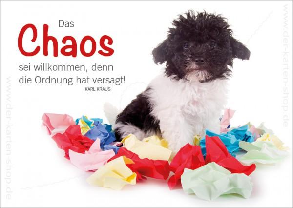 Postkarte Grußkarte kleiner Hund mit Papierschnipsel Chaos