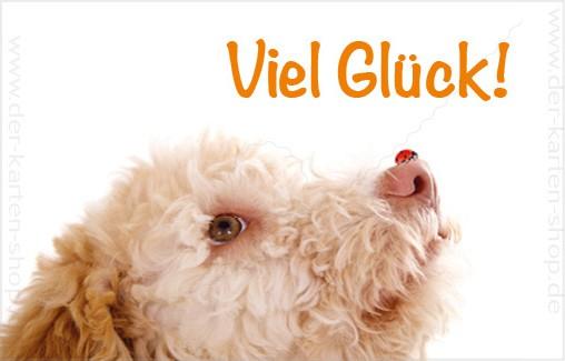 Minikarte Glückwunschkarte süßer Hund mit Marienkäfer 'Viel Glück'