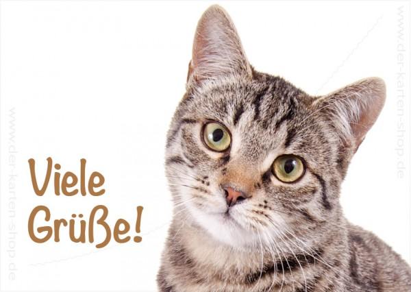 Postkarte Grußkarte getigerte Katze 'Viele Grüße'