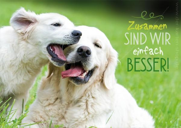 Doppelkarte Grußkarte Freundschaft zwei Golden Retriever Hunde 'Zusammen sind wir einfach besser!'