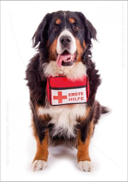 Doppelkarte Grußkarte knuffiger Berner Sehnenhund mit Erste Hilfe Paket um den Hals