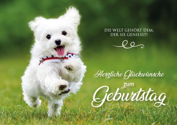 """Doppelkarte Geburtstagskarte Malteser Hund """"Die Welt gehört dem, der sie geniesst!"""""""