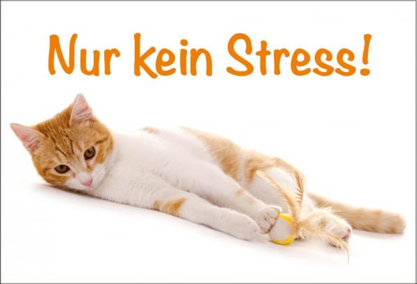 Magnet Kühlschrankmagnet süßes Kätzchen 'Nur kein Stress!'