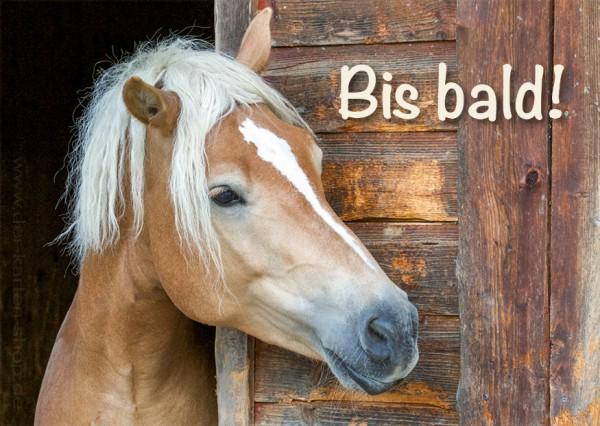 Postkarte Grußkarte Haflinger Pferd 'Bis bald'
