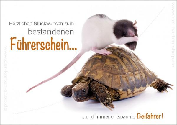 Doppelkarte Grußkarte Gratulation zum Führerschein 'witzige Ratte als Beifahrer bei Schildkröte'