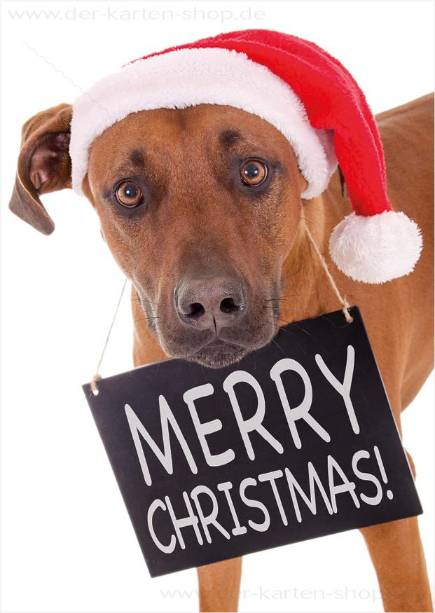 postkarte weihnachtskarte rhodesian ridgeback hund mit. Black Bedroom Furniture Sets. Home Design Ideas