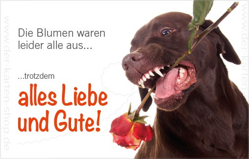 Minikarte Gluckwunschkarte Hund Frisst Rose Die Blumen Waren Leider