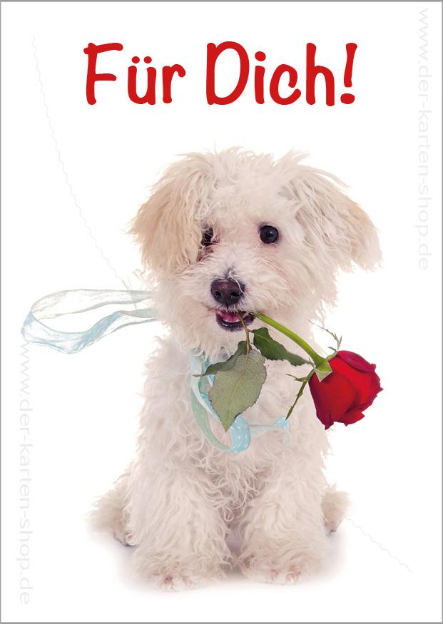 postkarte grusskarte kleiner hund mit rose fuer dich