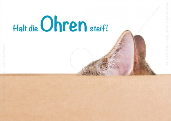 Doppelkarte Grußkarte Genesungskarte Motivation Katze im Karton 'Halt die Ohren steif'