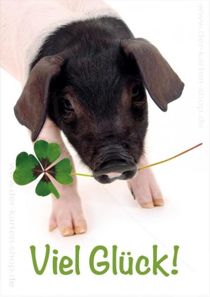 Postkarte Grußkarte süßes Ferkel Glücksschwein 'Viel Glück'
