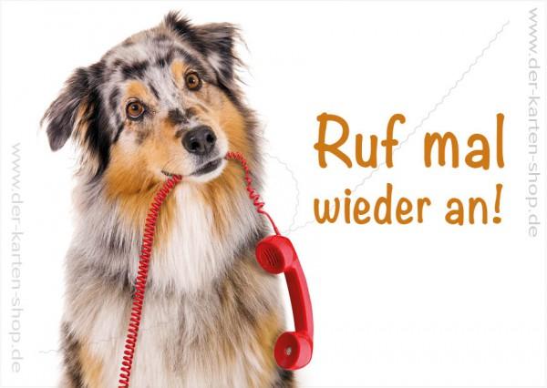 Postkarte Grußkarte Australian Shepherd Hund mit Telefonhörer 'Ruf mal wieder an'