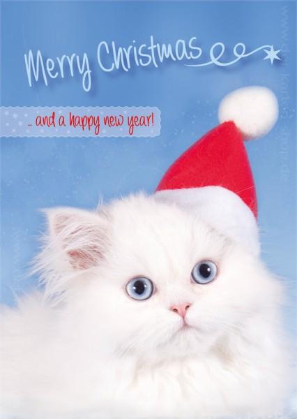 Postkarte Weihnachtskarte weiße Katze Kätzchen 'Merry Christmas'