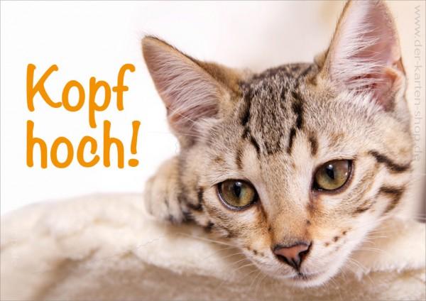 Doppelkarte Grußkarte Genesungskarte Motivation süße Katze 'Kopf hoch'