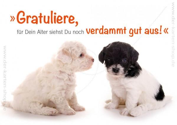 Doppelkarte Geburtstagskarte Hundewelpen Gratuliere, für Dein Alter siehst Du noch verdammt gut aus