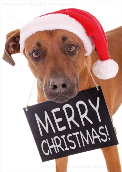 Postkarte Weihnachtskarte Rhodesian Ridgeback Hund mit Schild 'Merry Christmas'