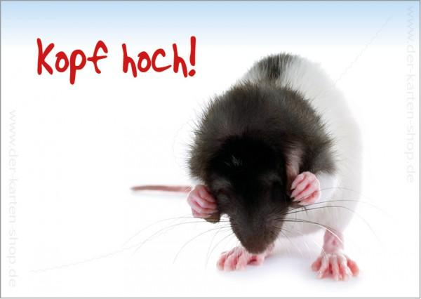 Postkarte Grußkarte kleine Ratte hält sich die Augen zu 'Kopf hoch'
