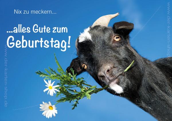Doppelkarte Geburtstagskarte witzige Ziege 'Nix zu meckern, alles Gute zum Geburtstag'