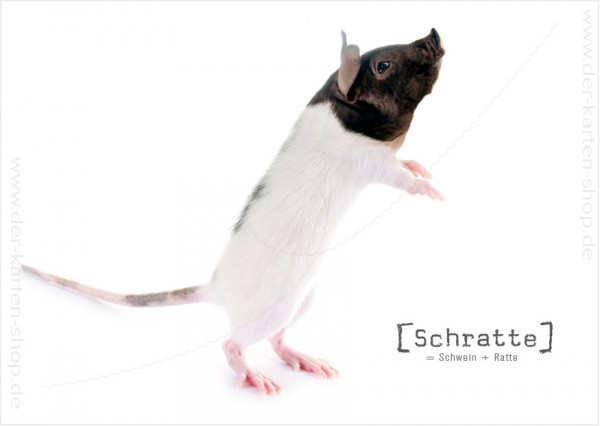 Postkarte Grußkarte Tierischer Mutant Schwein – Ratte 'Schratte'