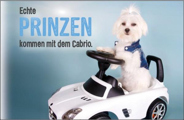 Henkelbecher Keramik Kaffeetasse Malteser Hund 'Echte Prinzen kommen mit dem Cabrio'