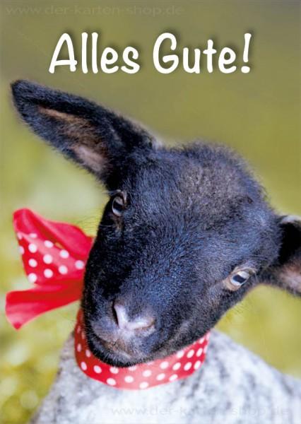 Postkarte Geburtstagskarte Grußkarte junges Lamm 'Alles Gute'