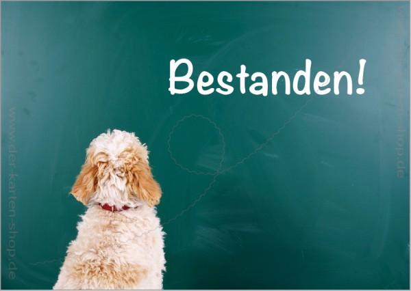 Postkarte Grußkarte kleiner Hund sitzt vor Tafel 'Bestanden!'