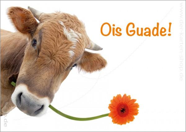 Postkarte Geburtstagskarte bayerische Kuh mit Blume 'Ois Guade'
