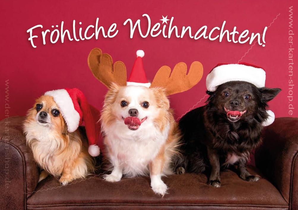 doppelkarte weihnachtskarte drei chihuahua hunde. Black Bedroom Furniture Sets. Home Design Ideas
