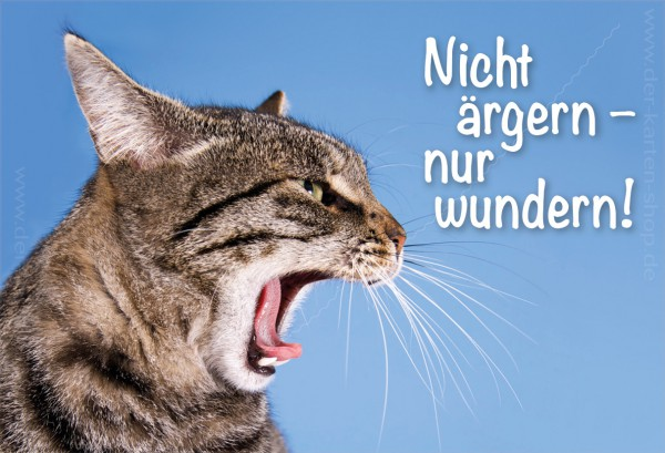 Magnet Kühlschrankmagnet Katze 'Nicht ärgern, nur wundern!'
