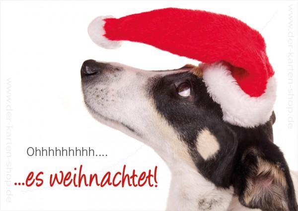 postkarte weihnachtskarte jack russel hund 39 oh es. Black Bedroom Furniture Sets. Home Design Ideas
