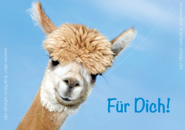 Doppelkarte Glückwunschkarte Grußkarte Alpaka 'Für Dich!'