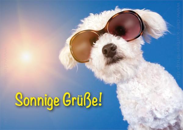 Postkarte Grußkarte kleiner, weißer Hund mit Sonnenbrille 'Sonnige Grüße'