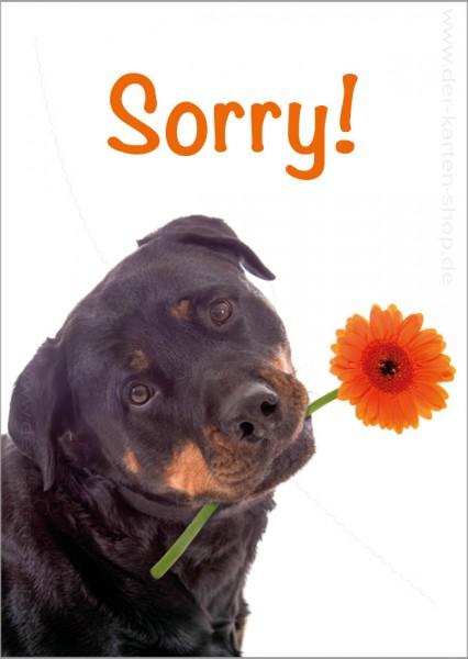 Postkarte Grußkarte Entschuldigungskarte Hund mit Blume 'Sorry'