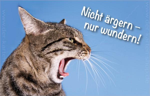 Minikarte Glückwunschkarte Grußkarte fauchende Katze 'Nicht ärgern, nur wundern!'